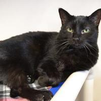 Adopt A Pet :: Hadley - Elkhorn, WI