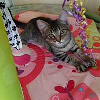 Adopt A Pet :: Timothy - Holmes Beach, FL