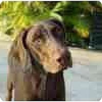 Adopt A Pet :: Reecie  **ADOPTED** - Eustis, FL