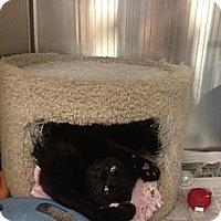 Adopt A Pet :: Princess Bubblegum - Greenville, SC