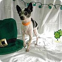 Adopt A Pet :: Skippy - Poulsob, WA
