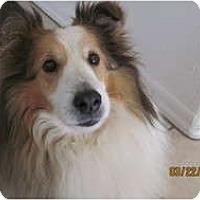 Adopt A Pet :: Rayki - apache junction, AZ