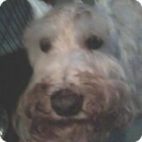 Adopt A Pet :: Brock - North Benton, OH