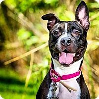 Adopt A Pet :: Lexus - Indianapolis, IN