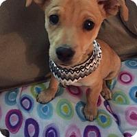 Adopt A Pet :: Jojo - West Richland, WA