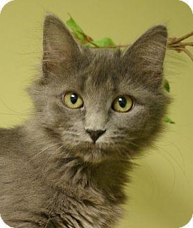 Domestic Longhair Cat for adoption in Hastings, Nebraska - Mouse