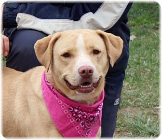 Labrador Retriever/Shar Pei Mix Dog for adoption in Welland, Ontario - Molly