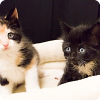 Adopt A Pet :: Lana and Sterling - Chicago, IL
