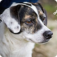Adopt A Pet :: BoBo - Lincolnton, NC