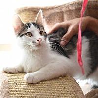Adopt A Pet :: Zach - Baltimore, MD