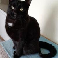 Adopt A Pet :: Dusk - Rio Rancho, NM