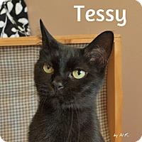 Adopt A Pet :: Tessy - Pleasantville, NJ