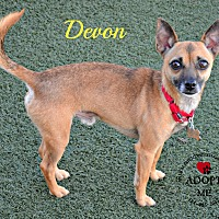 Adopt A Pet :: Devon - Youngwood, PA