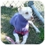 Photo 1 - Poodle (Miniature) Mix Dog for adoption in San Clemente, California - TYCO