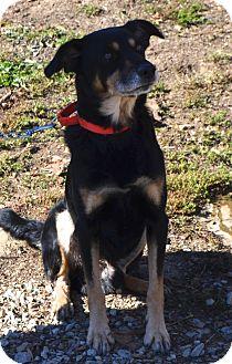 Border Collie/Shepherd (Unknown Type) Mix Dog for adoption in Eighty Four, Pennsylvania - Wes