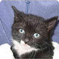 Adopt A Pet :: Bootsie - New York, NY