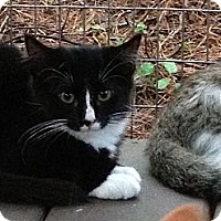 Adopt A Pet :: Socks - Monroe, GA