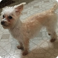 Adopt A Pet :: TATER TO HAS BEEN ADOPTED- - Frisco, TX