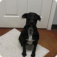 Adopt A Pet :: Wallace - South Dennis, MA