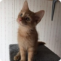 Adopt A Pet :: Dallas - McHenry, IL