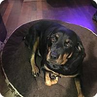 Adopt A Pet :: Bonnie - Gilbert, AZ