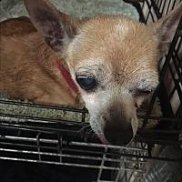 Adopt A Pet :: Sassy - Blanchard, OK