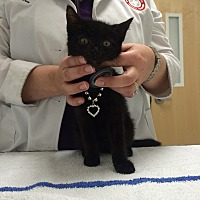 Adopt A Pet :: Luke - Miami Shores, FL