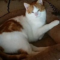 Adopt A Pet :: Meeko - Sacramento, CA