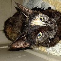 Adopt A Pet :: Evangeline - Maryville, TN