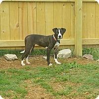 Adopt A Pet :: Herra - Adamsville, TN