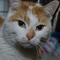 Adopt A Pet :: Artie - Jaffrey, NH