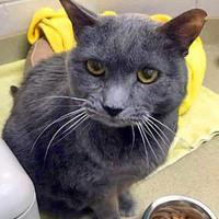 Adopt A Pet :: Zella - Noblesville, IN