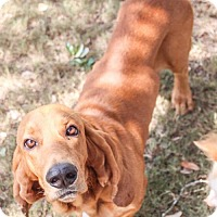 Adopt A Pet :: Buster - Pipe Creed, TX