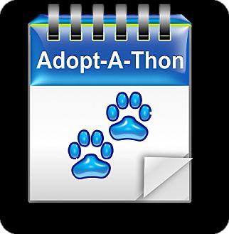 Dachshund Dog for adoption in Morrisville, Pennsylvania - Adopt-A-Thon