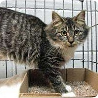 Adopt A Pet :: Clementine - Jacksonville, FL