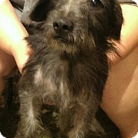Adopt A Pet :: Sunny - Kingwood, TX