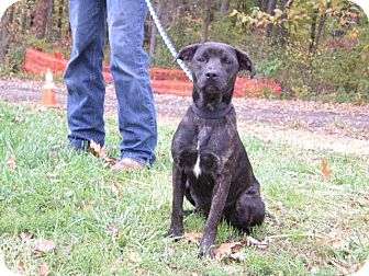 Hound (Unknown Type) Mix Dog for adoption in New Castle, Pennsylvania - Kylee