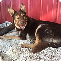 Adopt A Pet :: Jasmine - Lebanon, CT