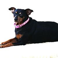 Adopt A Pet :: Gracie - Topeka, KS