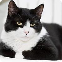 Adopt A Pet :: Jazz - Lombard, IL