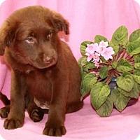 Adopt A Pet :: Hershey - Salem, NH