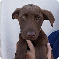 Adopt A Pet :: Reesie - Oviedo, FL