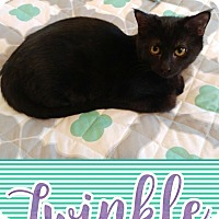 Adopt A Pet :: Twinkle - Wichita, KS