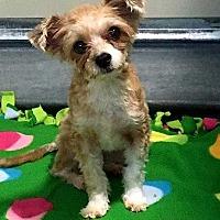 Adopt A Pet :: BROOKLYN - Hampton, VA