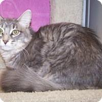 Adopt A Pet :: Rhett - Colorado Springs, CO