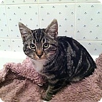 Adopt A Pet :: Marlie - Island Park, NY