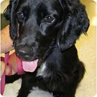 Adopt A Pet :: Herman - Sugarland, TX