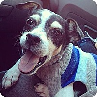 Adopt A Pet :: Stanley - Wilmington, DE