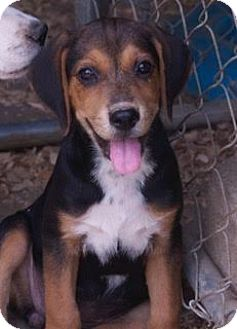 Hound (Unknown Type) Mix Puppy for adoption in Spring Valley, New York - Ebby