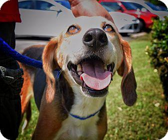 Hound (Unknown Type) Mix Dog for adoption in Wilmington, North Carolina - Virginia